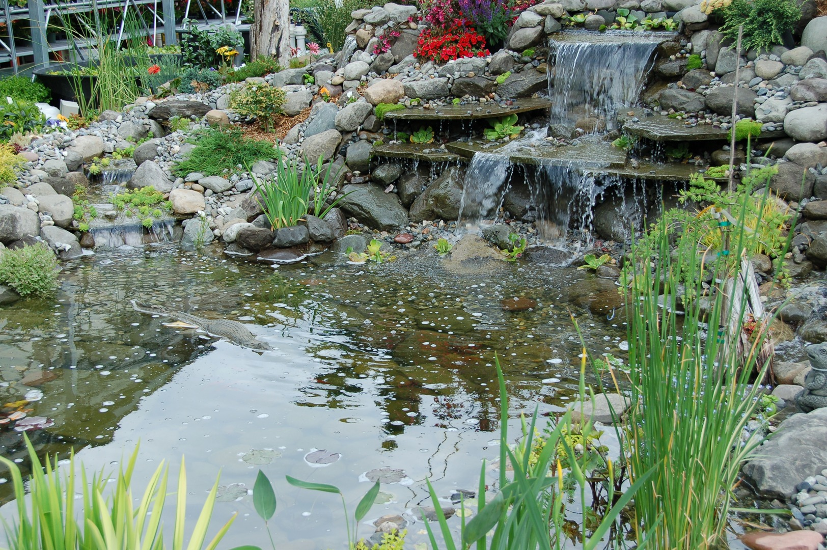 Water Gardening at Fairfield Garden Center